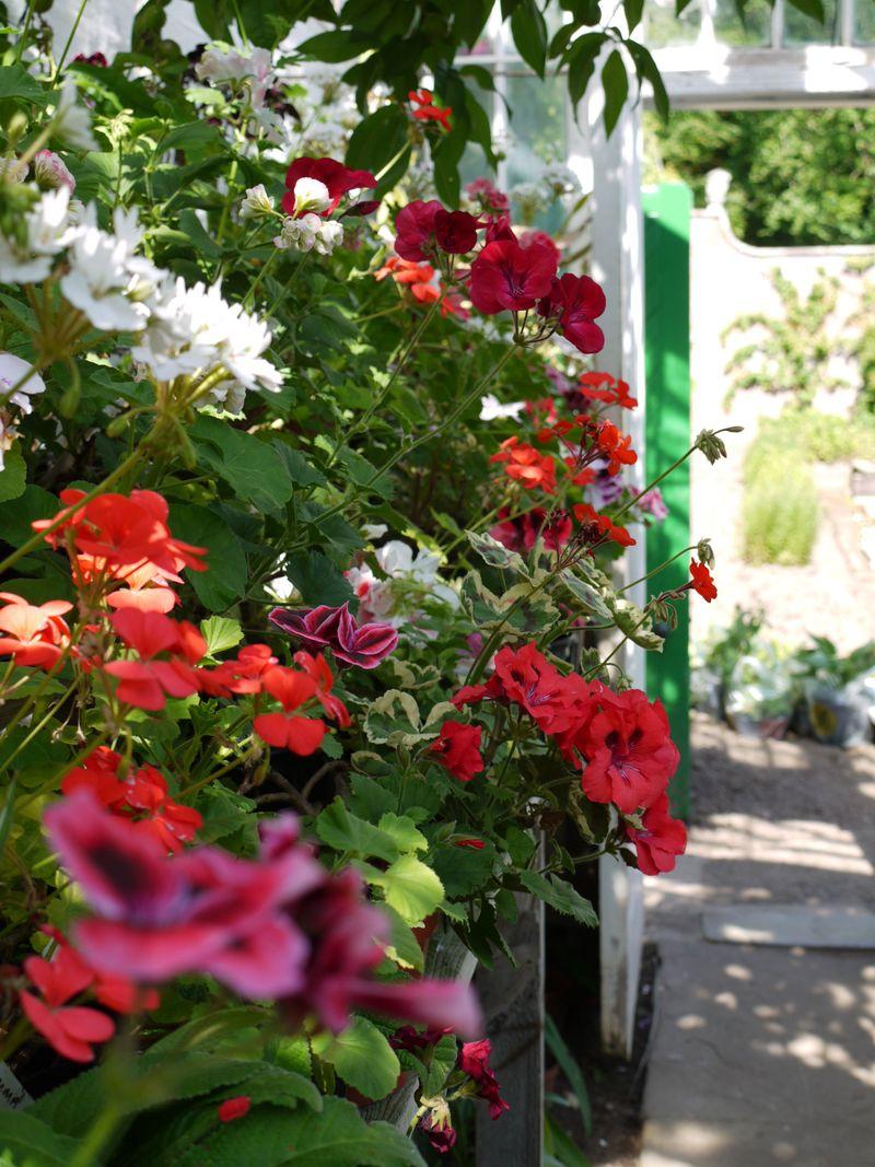 Greenhouse-flowers