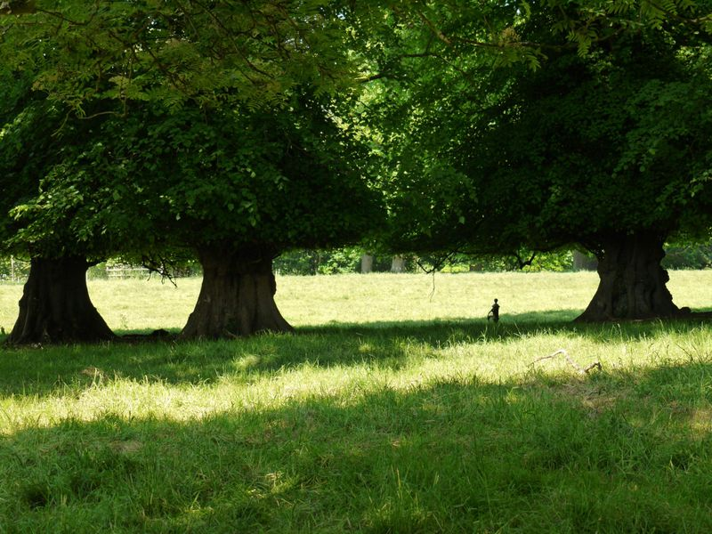 Landscape,open-garden