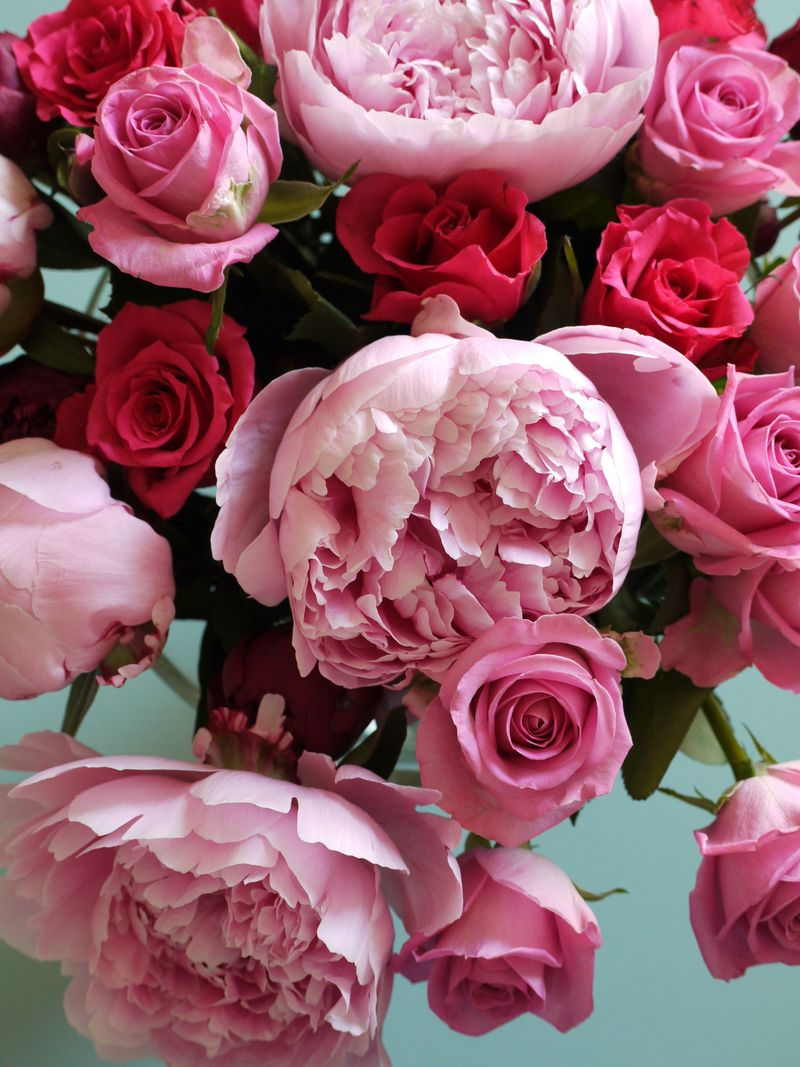 Pink,red-roses