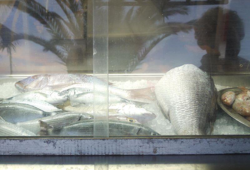 Fish-in-case