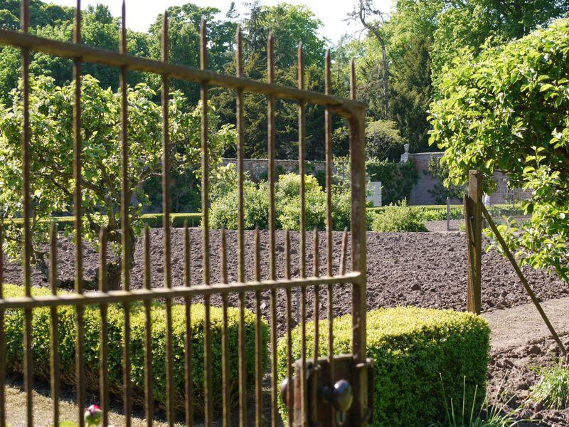 Garden-veg-plot