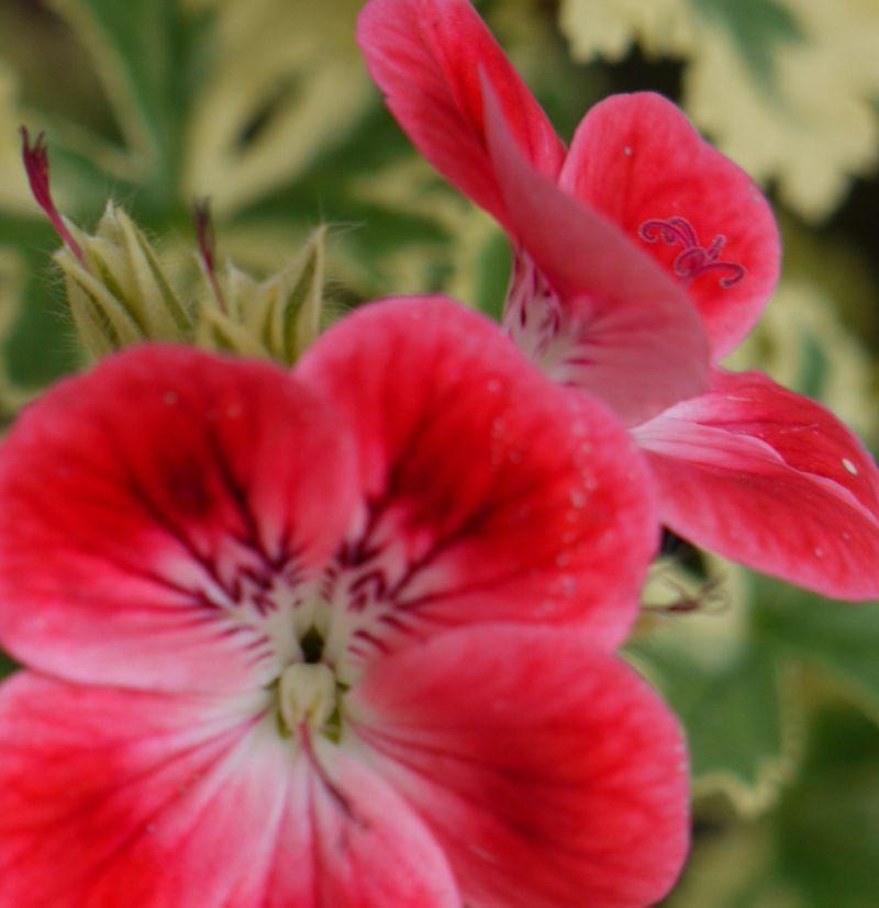 Detail-flower