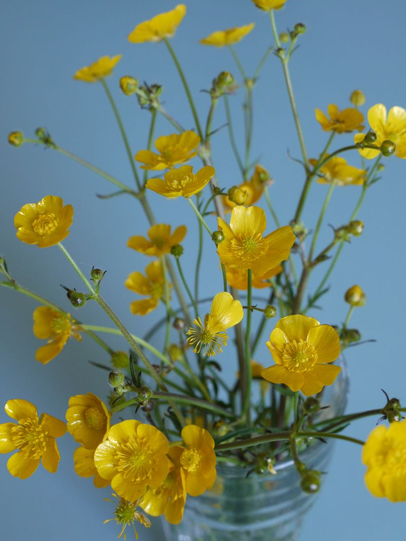 Buttercups-in-jar