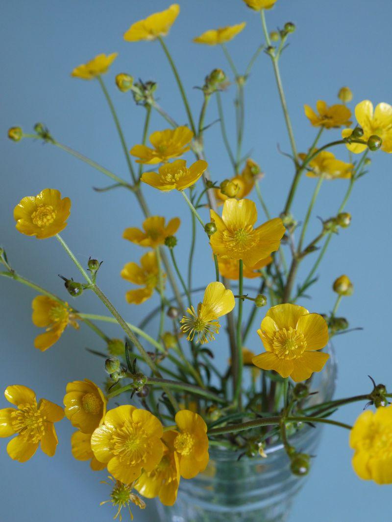 Buttercups-in-jar