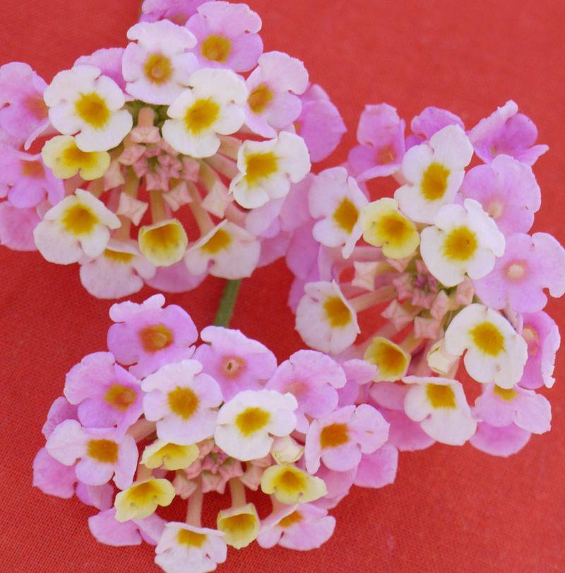 Flowers-on-orange