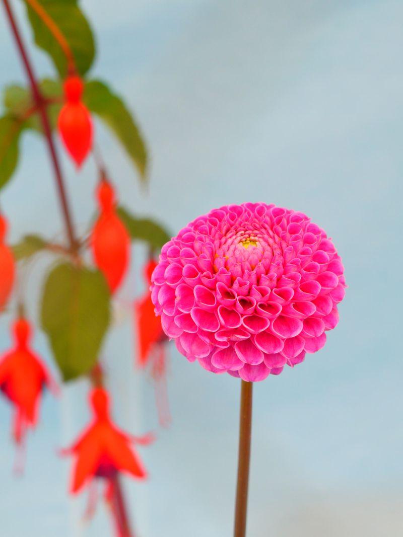 Floral-display11