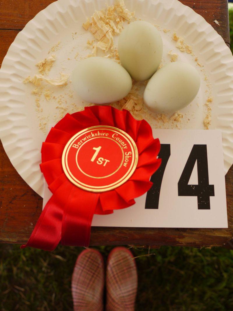 Winner-eggs