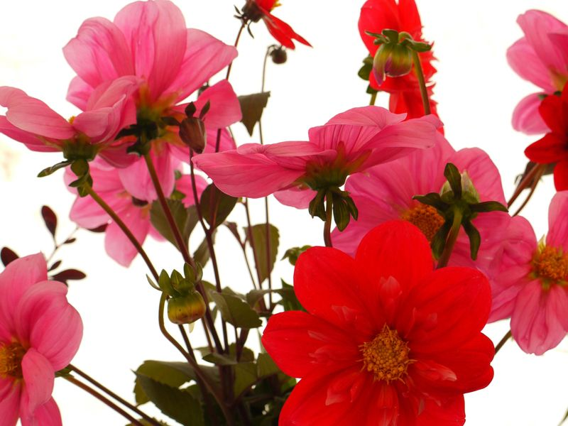 Florals-2