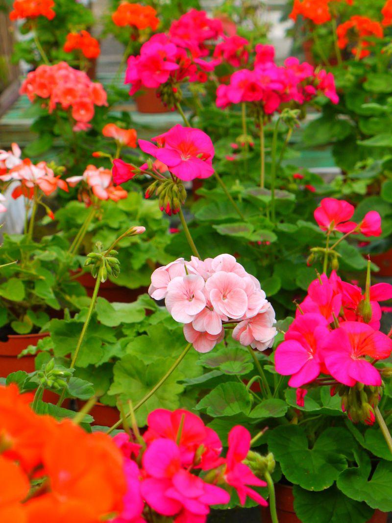 Flowers-bright-4