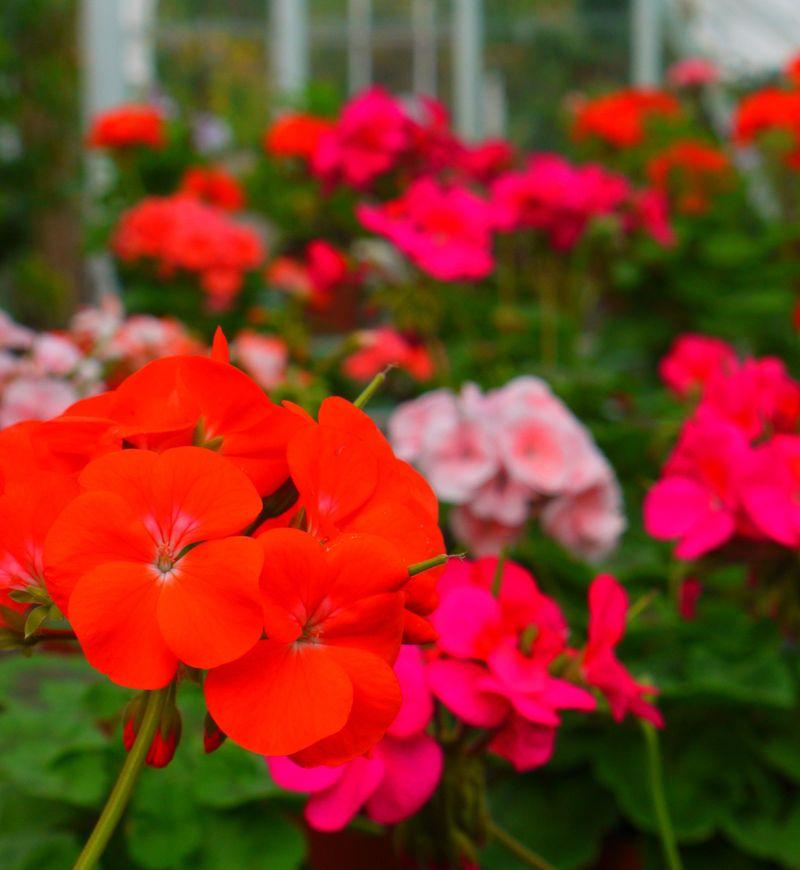 Flowers-bright-2