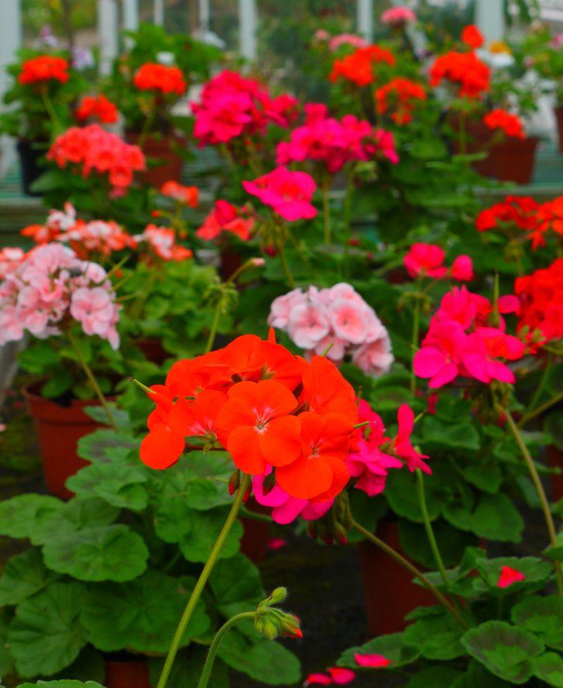Flowers-bright-1
