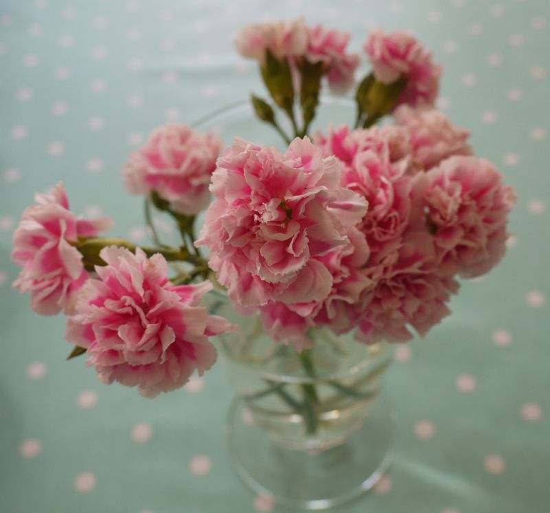 Carnations-5