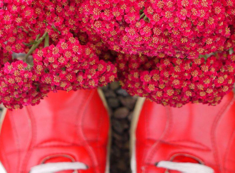 Floors-flowers-5