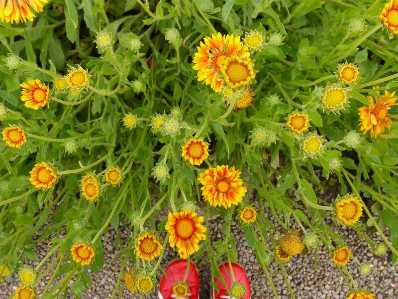 Floors-flowers-7