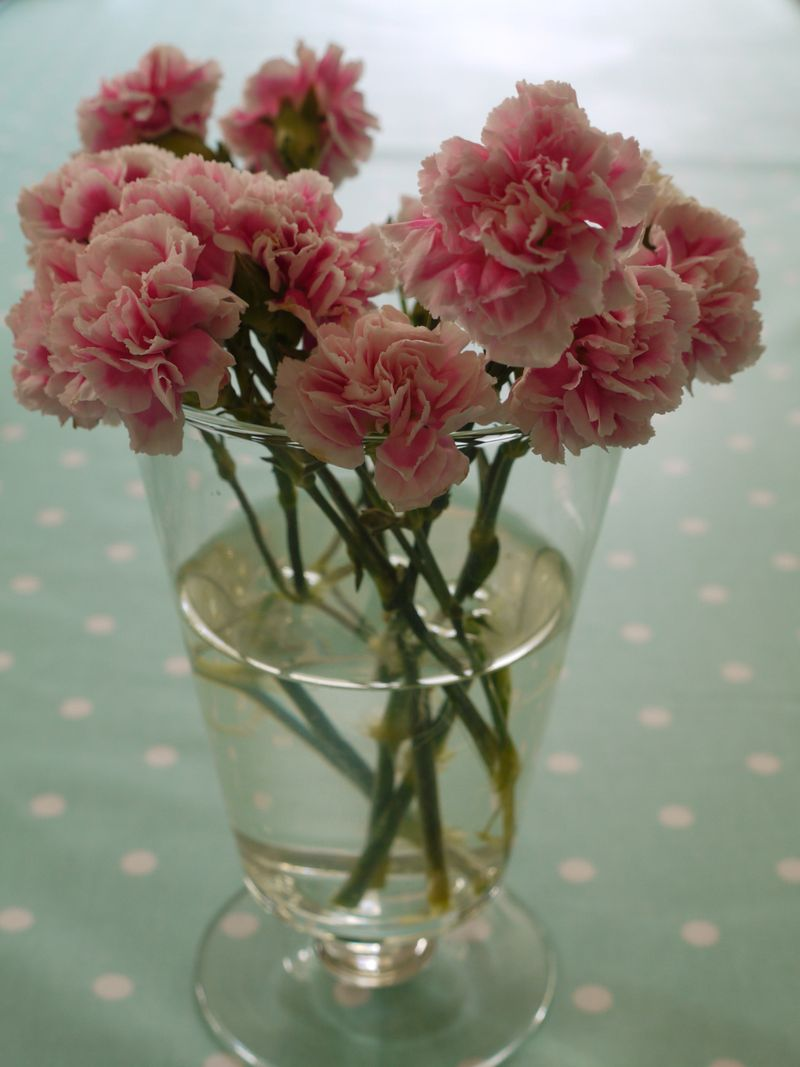 Carnations-1