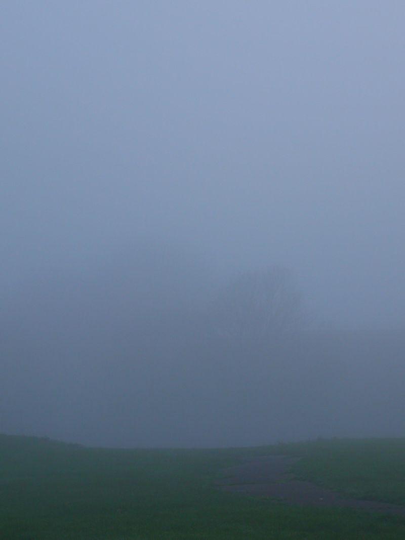 Mist-behind-hedge