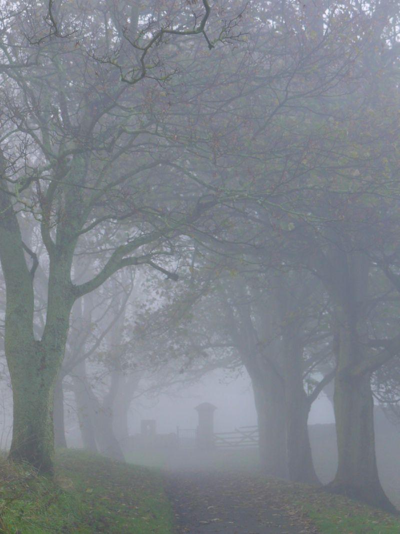 Mist-lane
