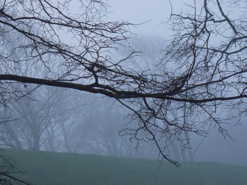 Mist-branches