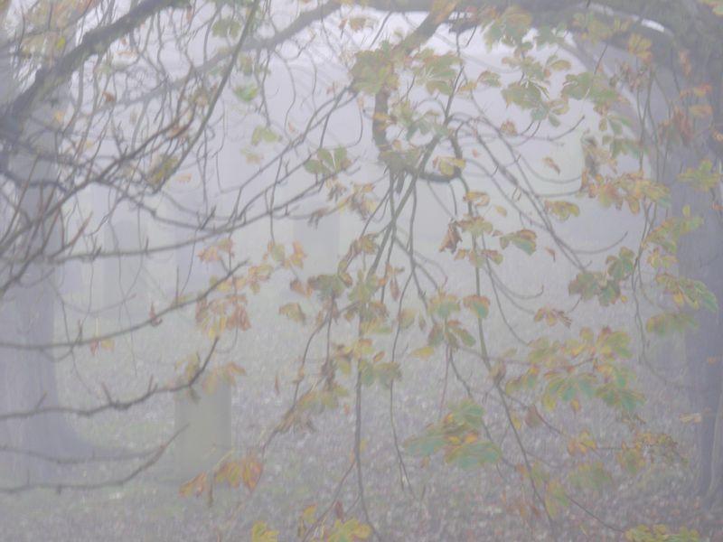 Mist-churchyard-5