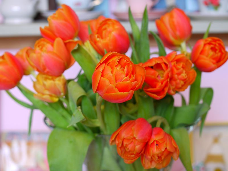 Tulips-in-vase-bunched