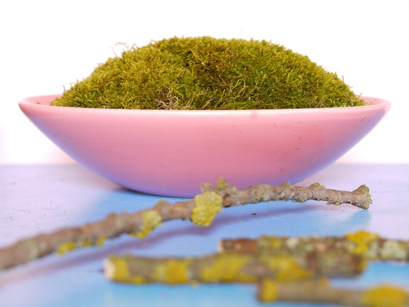 Bowl-of-moss,-1st-pic-