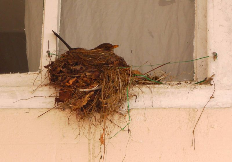 Nest-from-outside