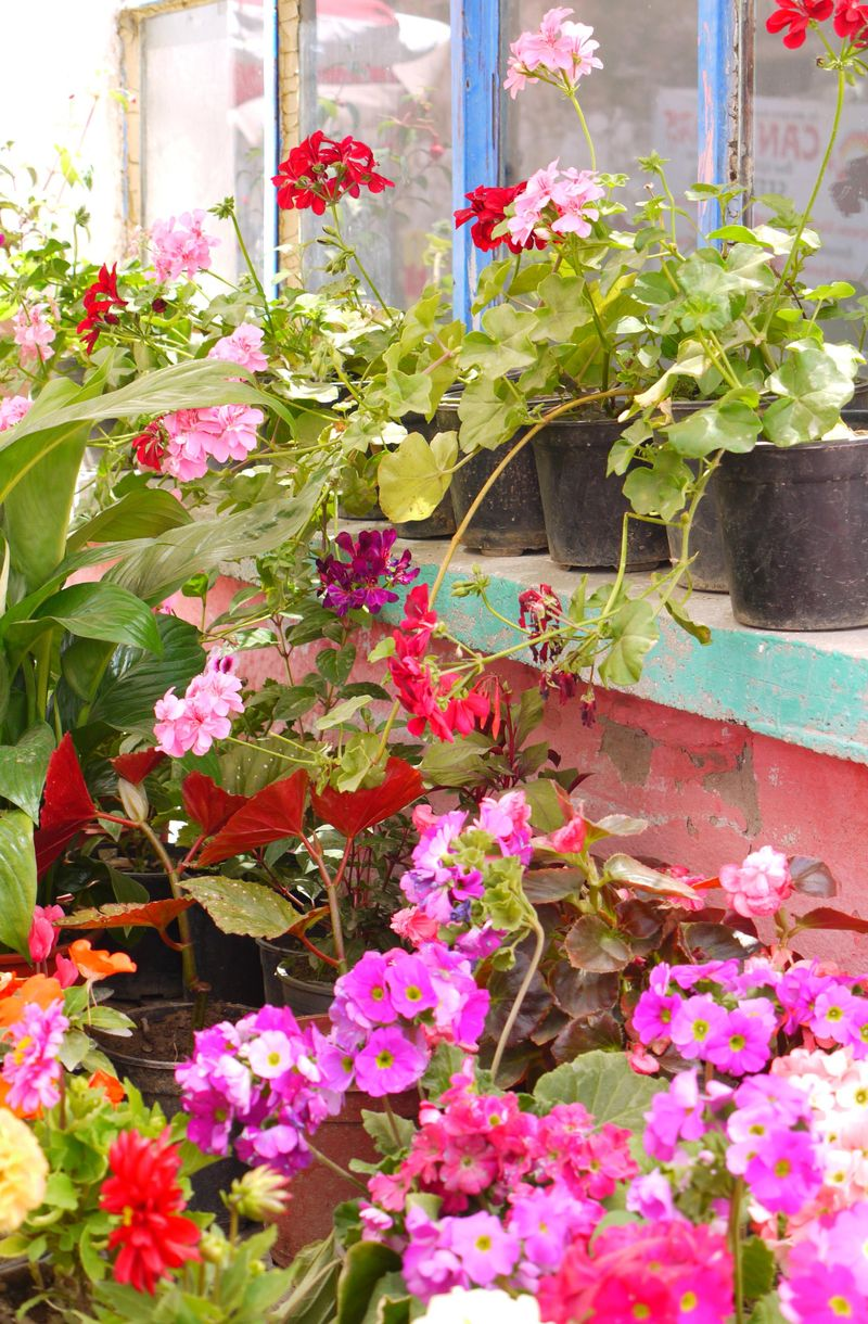 Serchek-mar,-flower-stall2