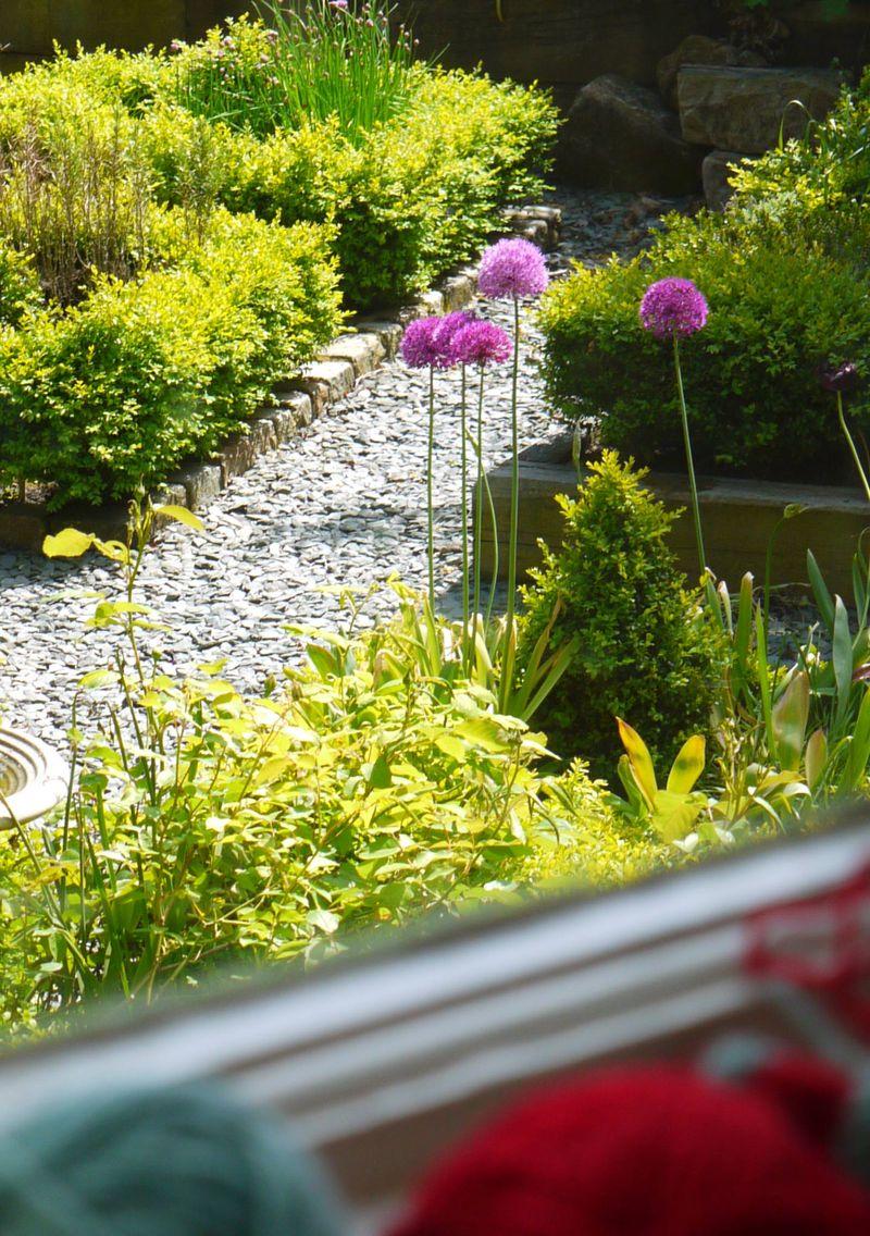Alliums-from-window,-knitti