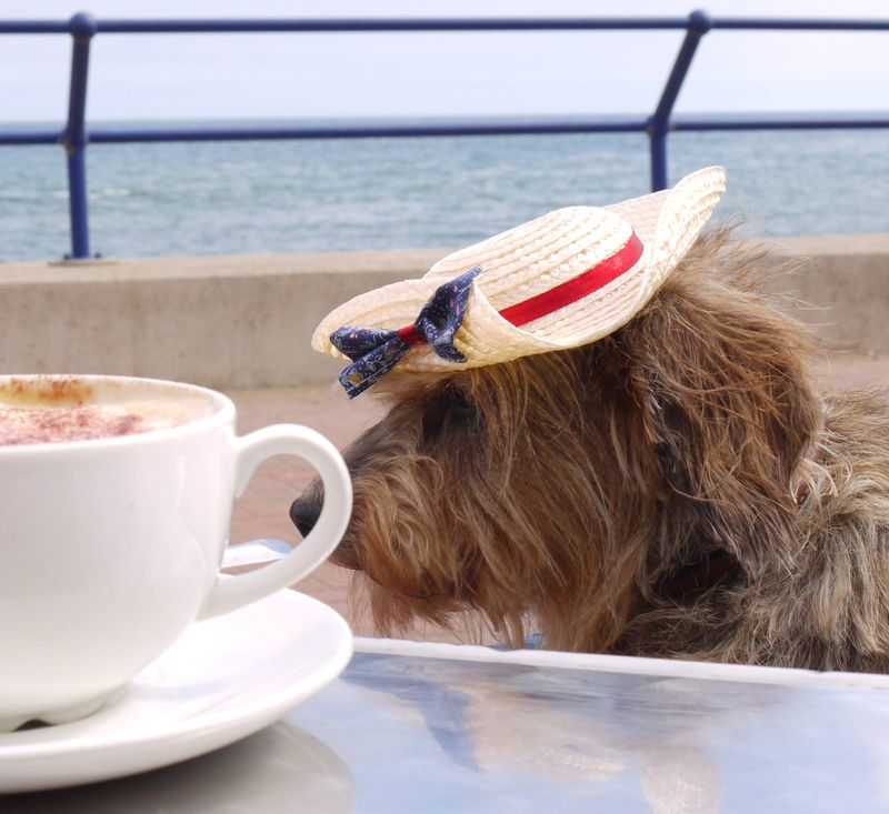 Ellie,-hat,-side-mos