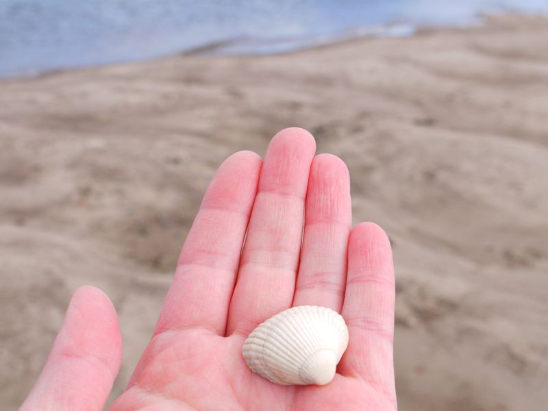 1st-pic--my-hand,-shell
