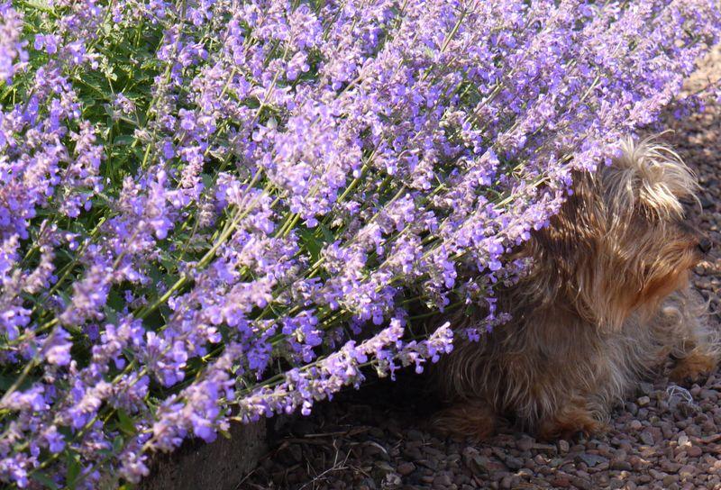 Ellie.-full-pic.-lavender