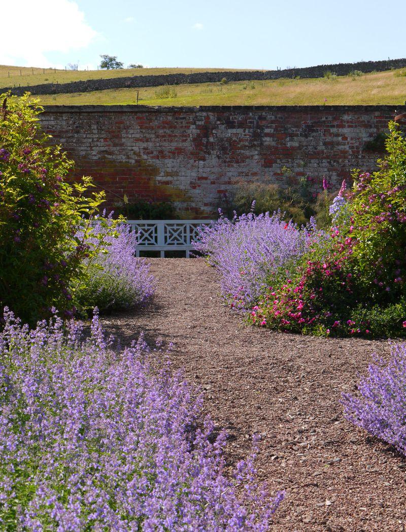 Garden-wall.-lavender