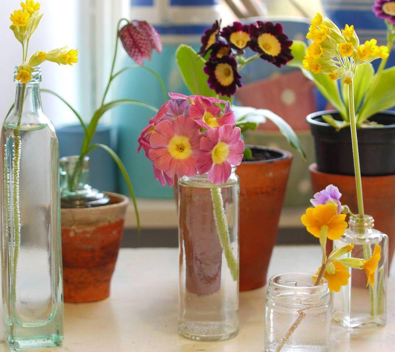 Plants-on-desk,-first-image