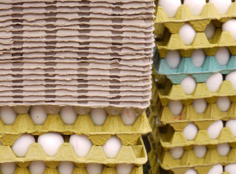 Turk,-eggs-yellow-beige-tur