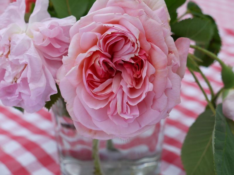 Roses,-1st-image