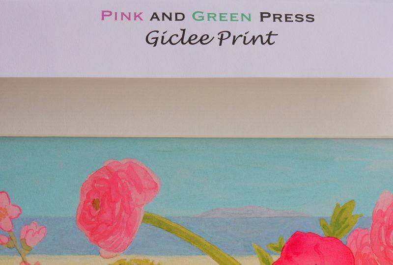 Pink-ranun,-p-and-g-press-f