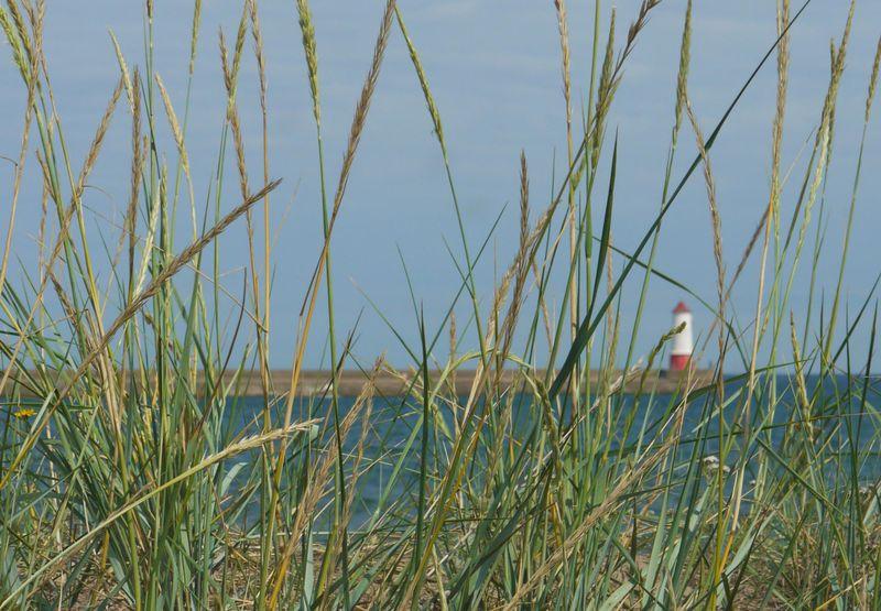 Lighthouse-through-grass