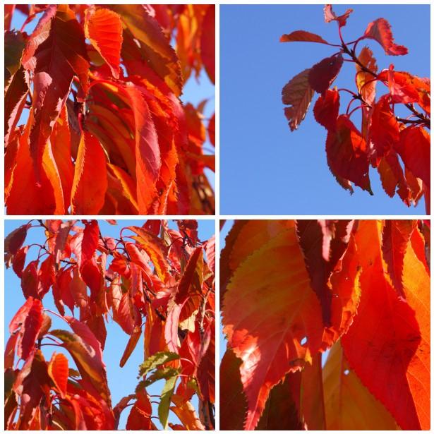 Mosaic autumn leaves