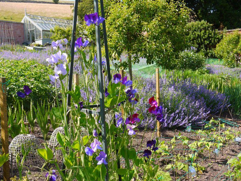 Garden,-full-pic