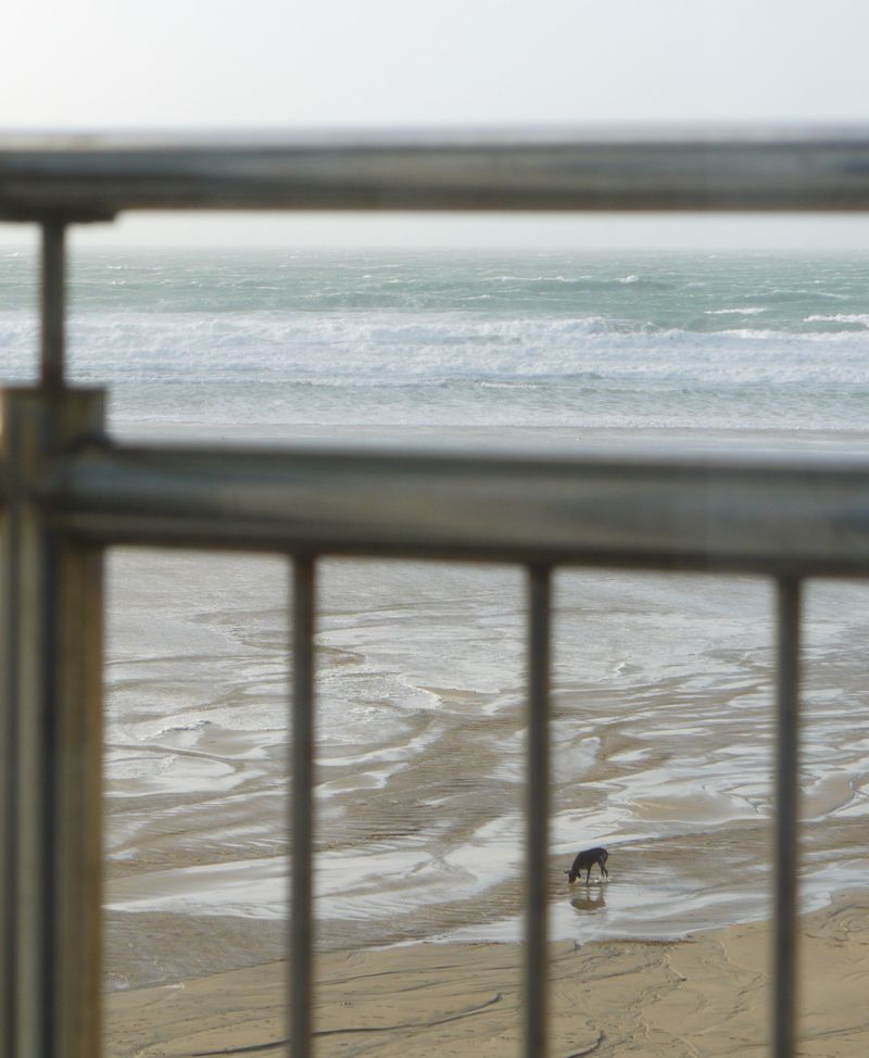 Fifeteen-view,-dog-on-beach
