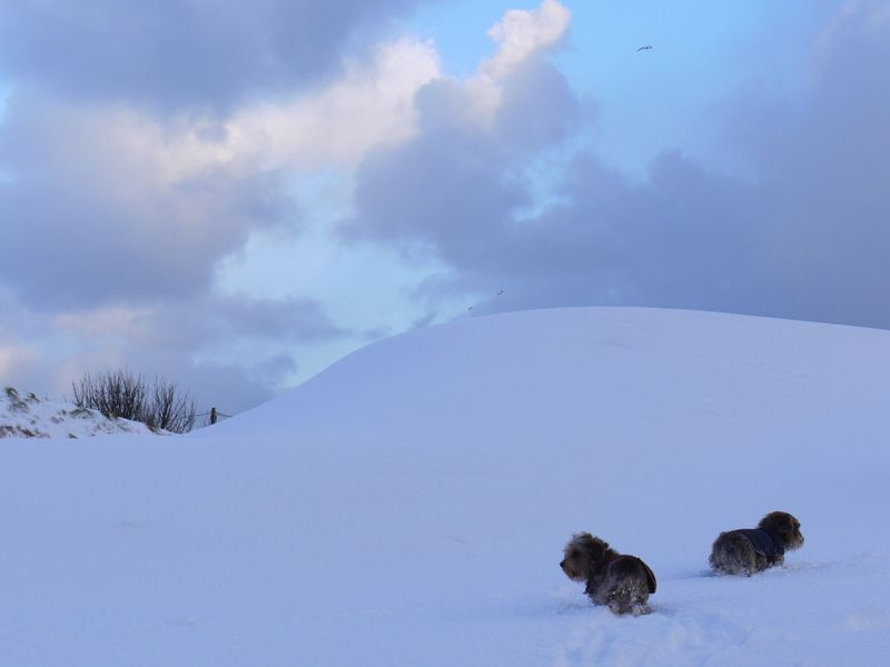 Dogs,-snow,-looking-dif-way