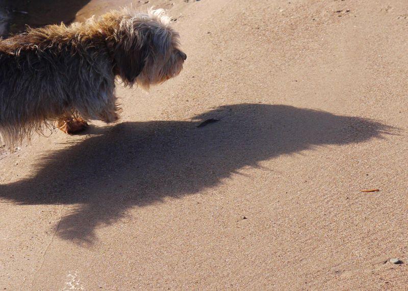 Shadow,-ellie,-full-pic
