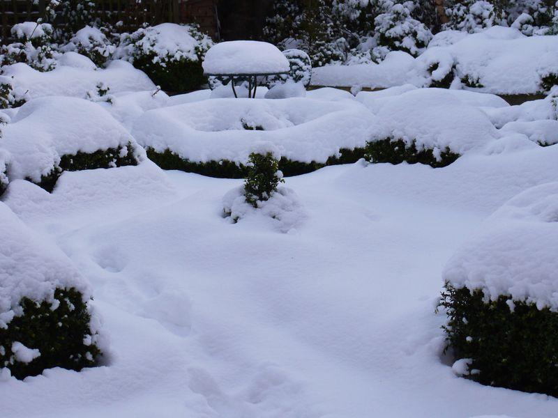 Garden,-wedn-1