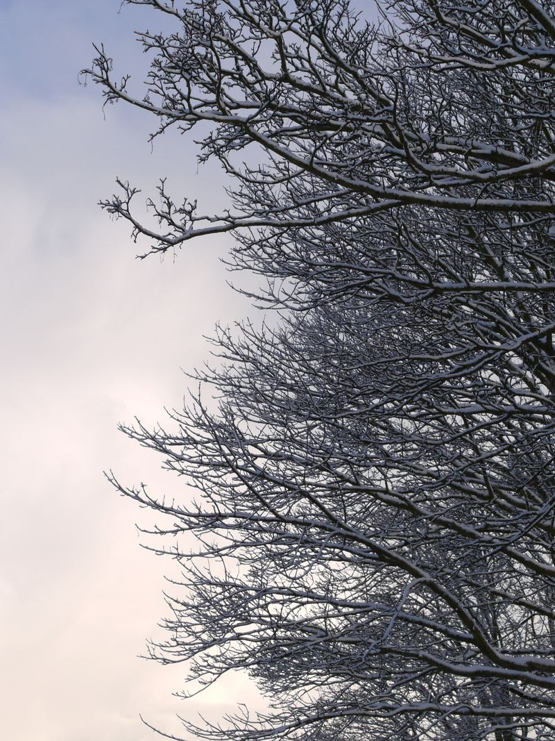Branches,-full-pic