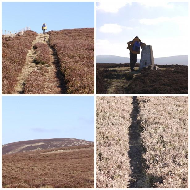Mosaic heather, walk