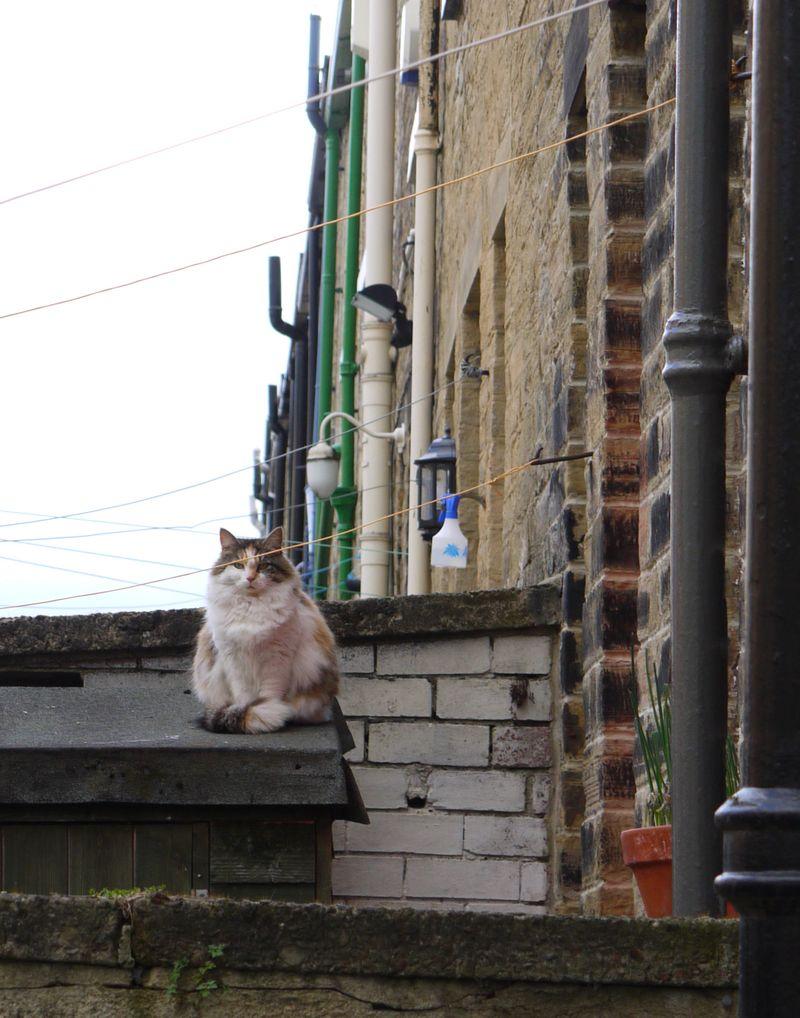 Cat-staring