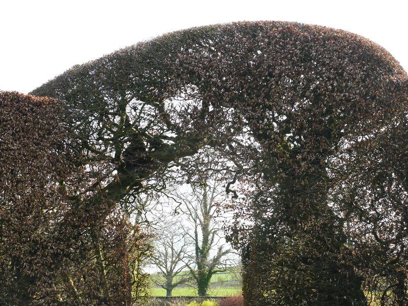 Topiary-16