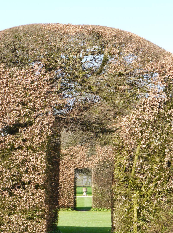 Topiary-17