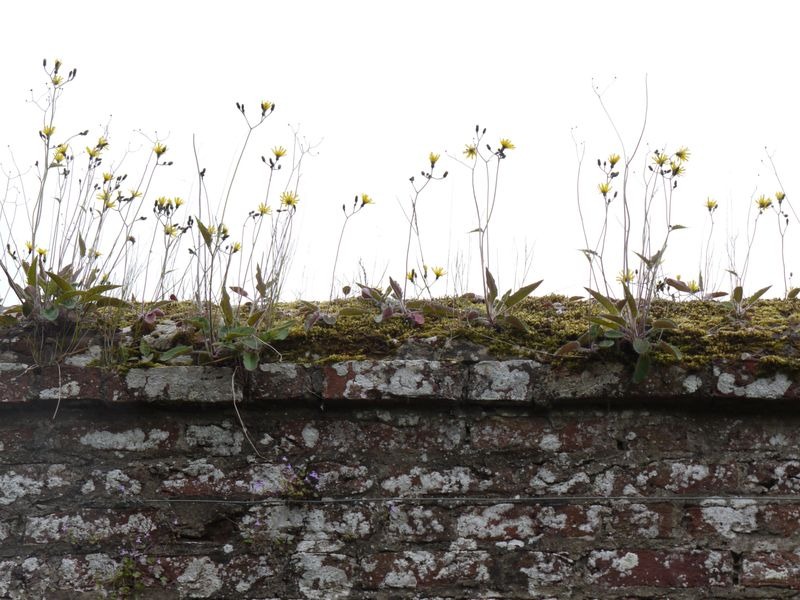 Weeds-on-wall