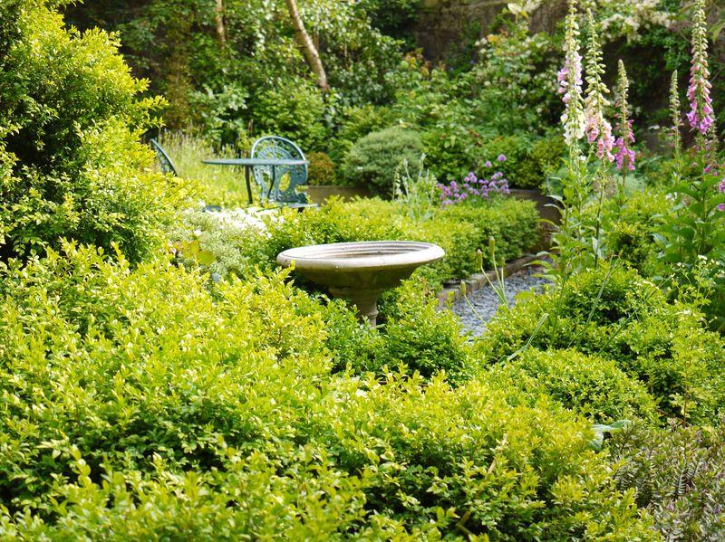Garden,-good-pic